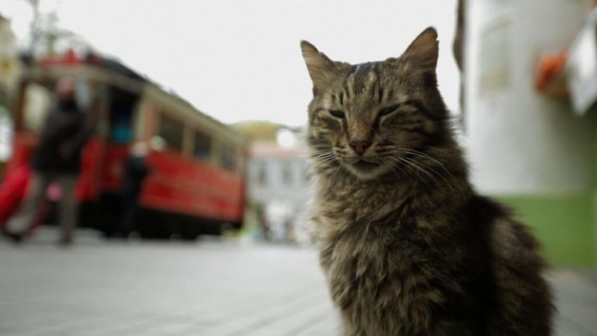 Kedi Cica3