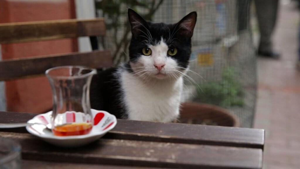 Kedi.cica2