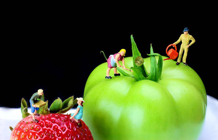 the planting tomato and strawberry little people on food paul ge