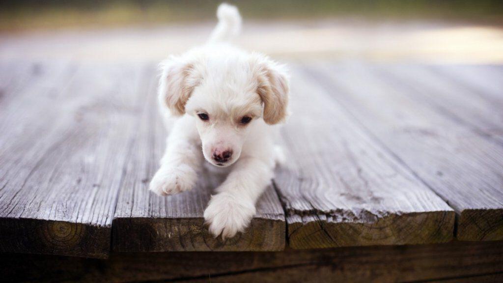 7033644 little cute dog