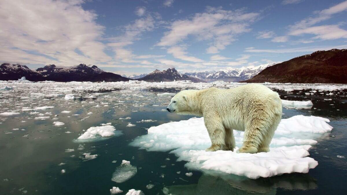 8845010 stop global warming