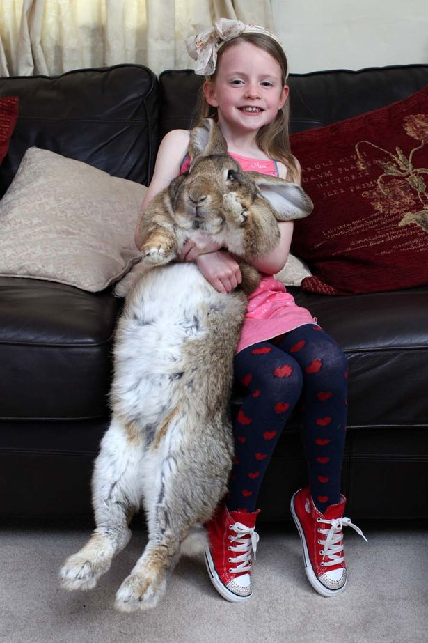 Darius the rabbit outstretched with Mia aged 6