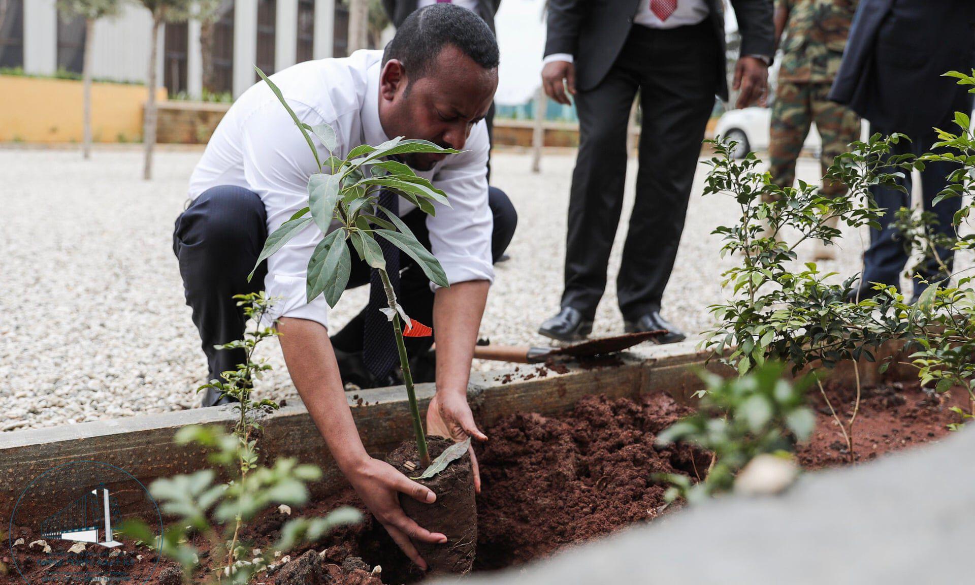 etiópia faültetés klímakatasztrófa