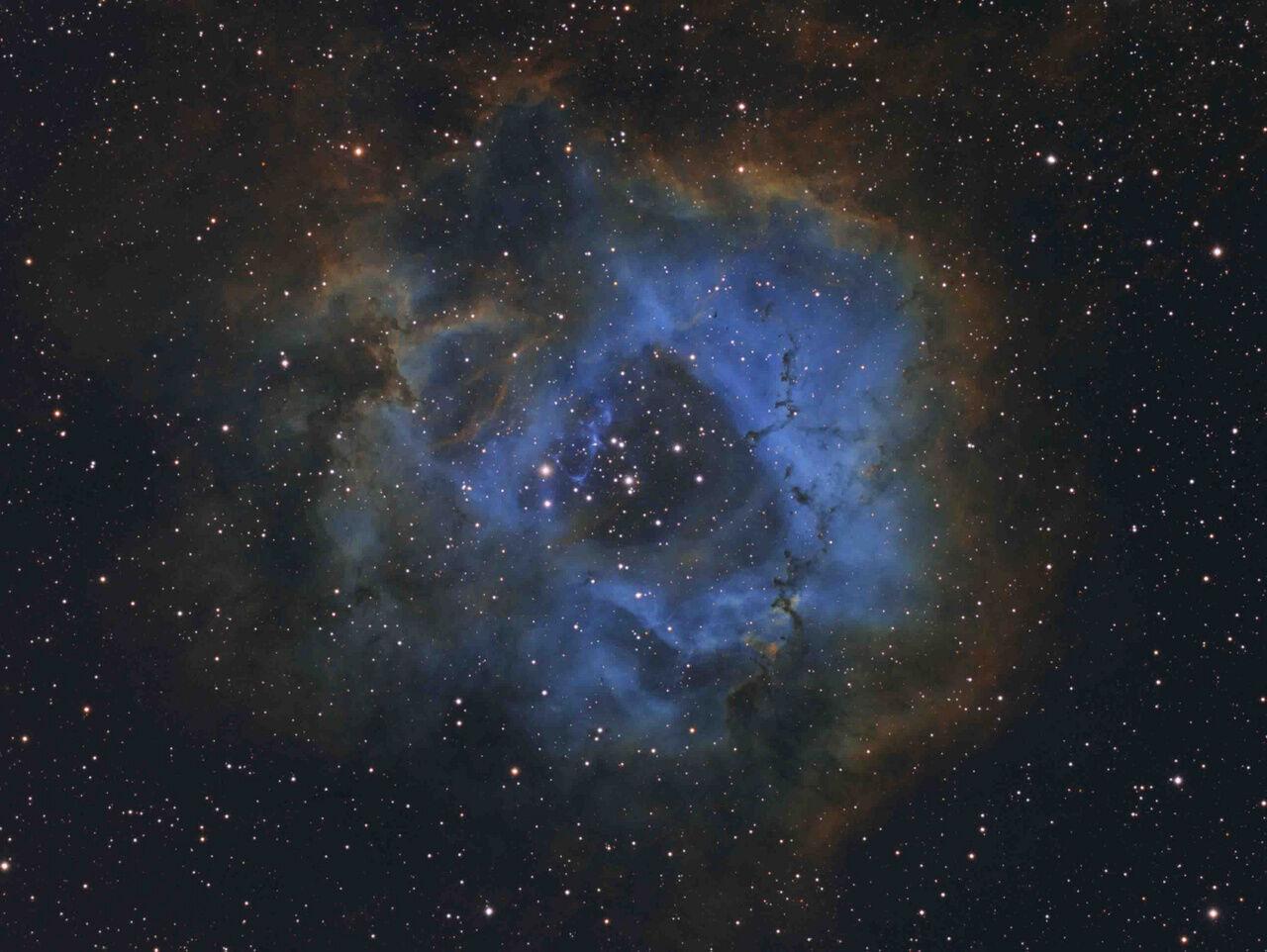 davy van der Hoeven csillagvirág