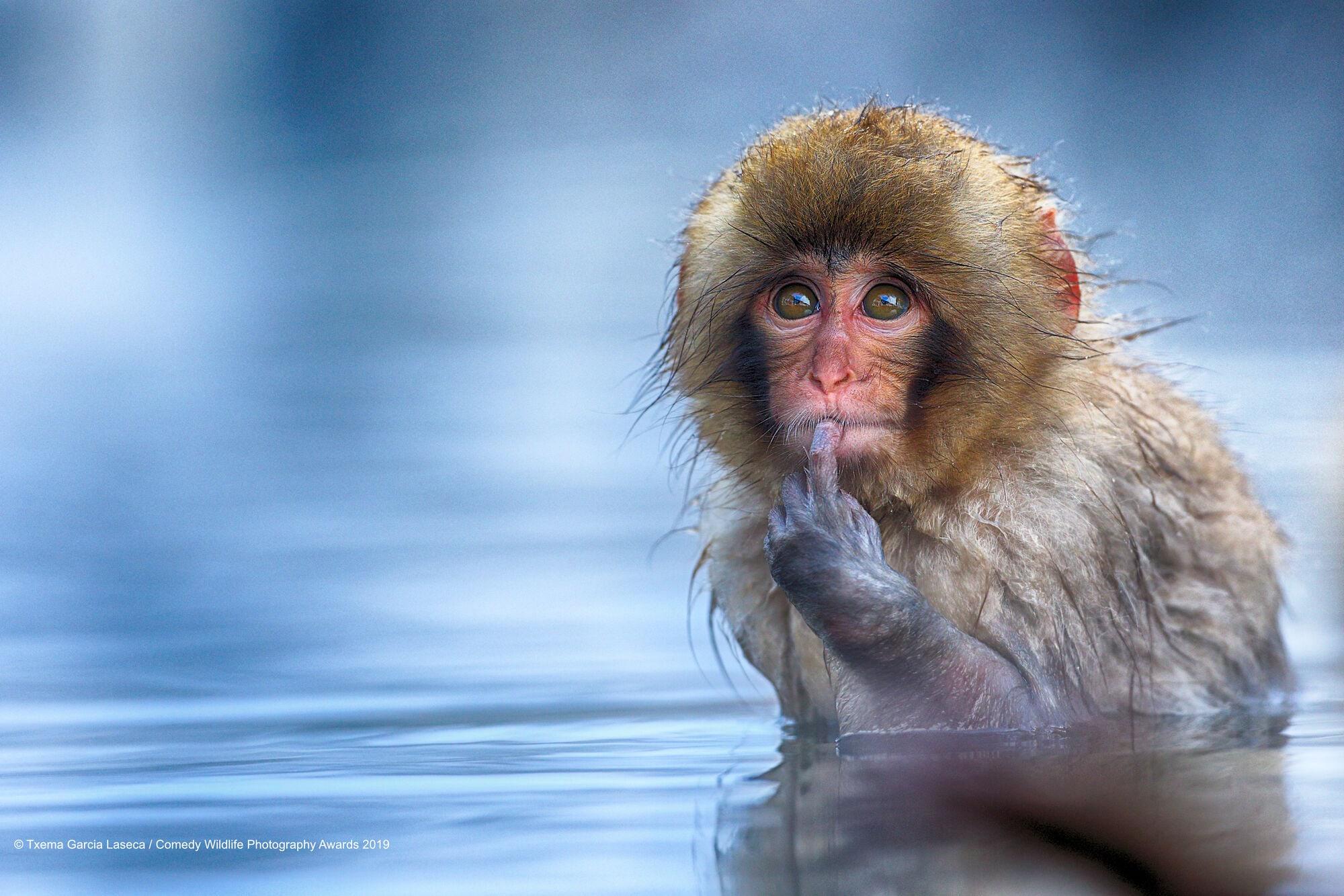 comedy wildlife photography 8