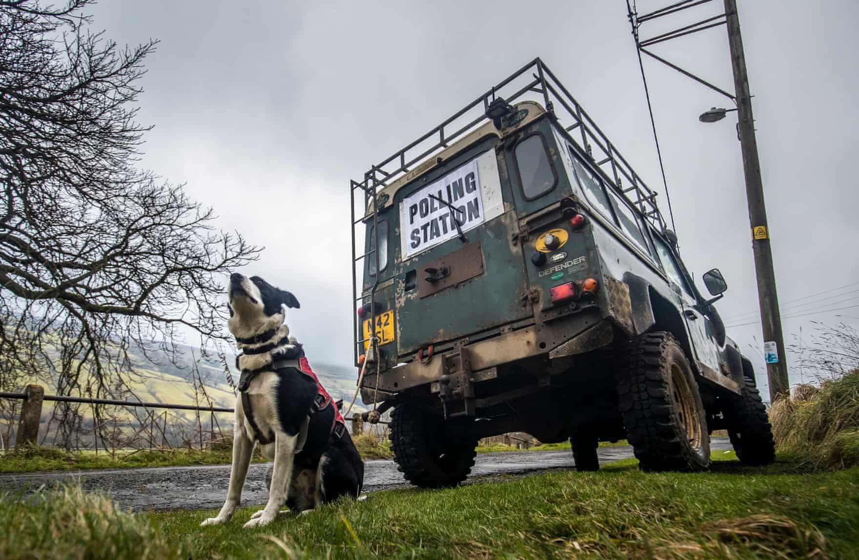 brit választás 2019 kutyák