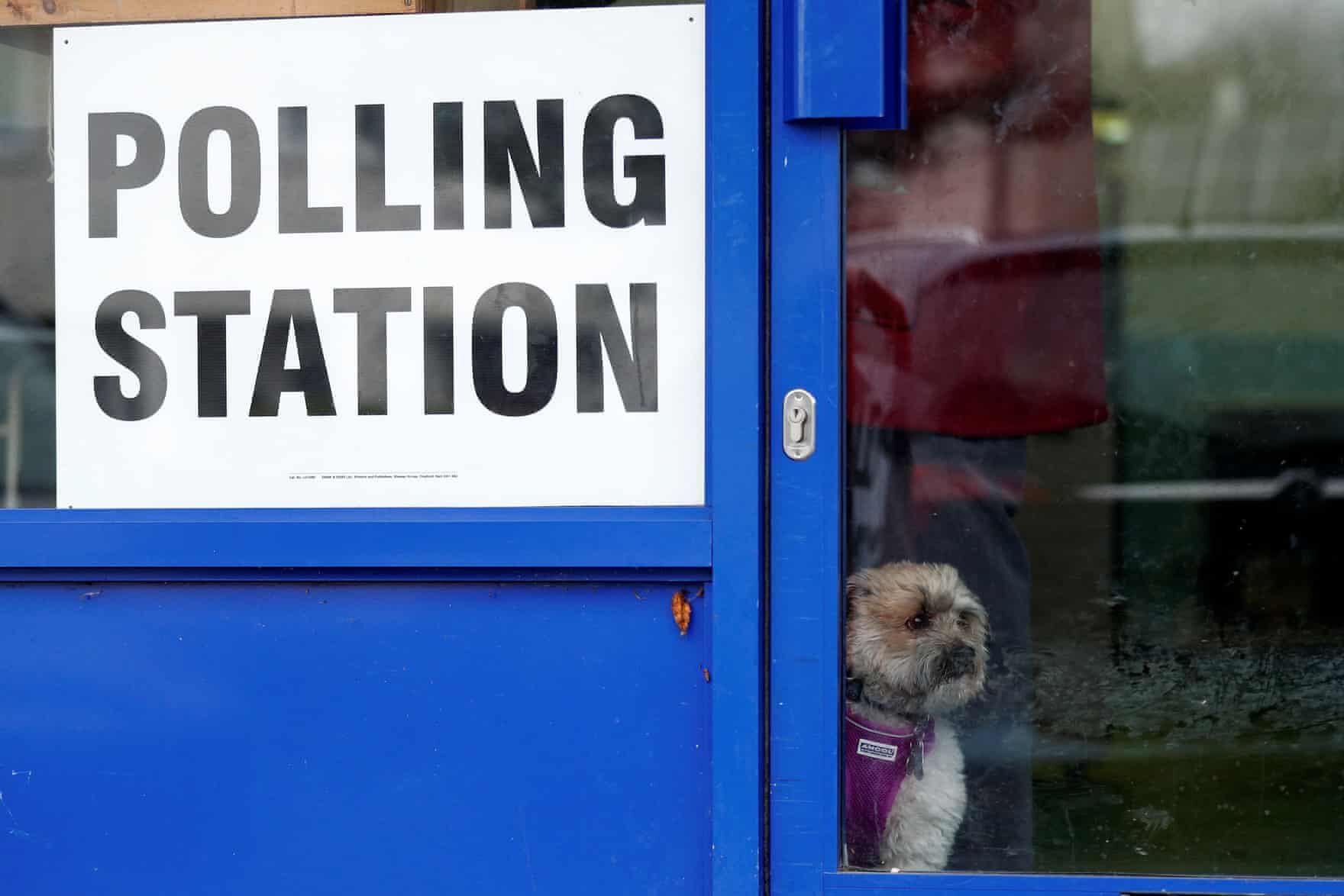 brit választás 2019 kutyák11