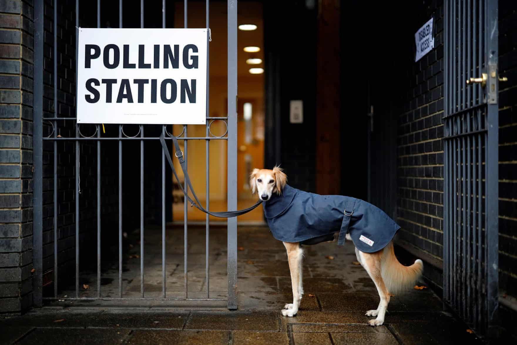 brit választás 2019 kutyák3