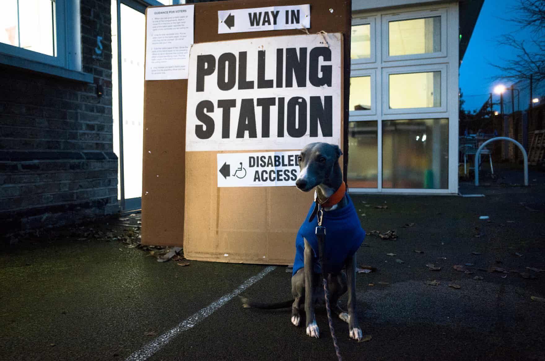 brit választás 2019 kutyák4