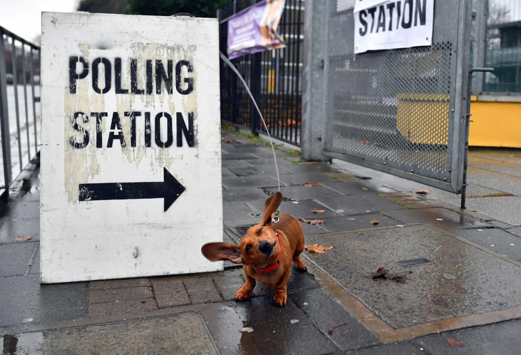 brit választás 2019 kutyák6