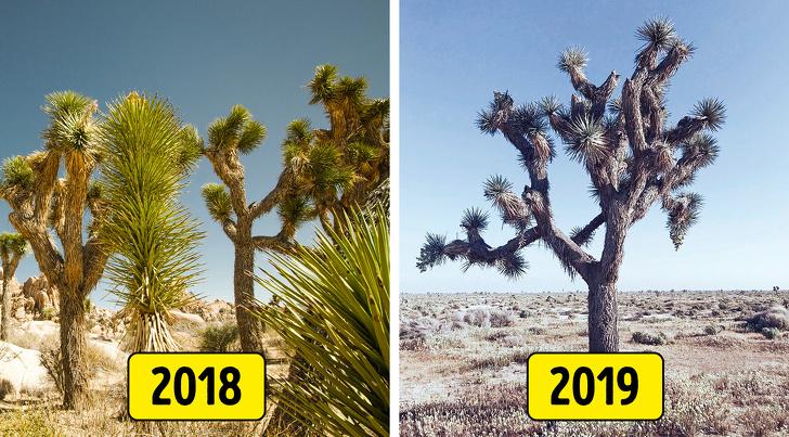 joshua tree nemzeti park kalifornia