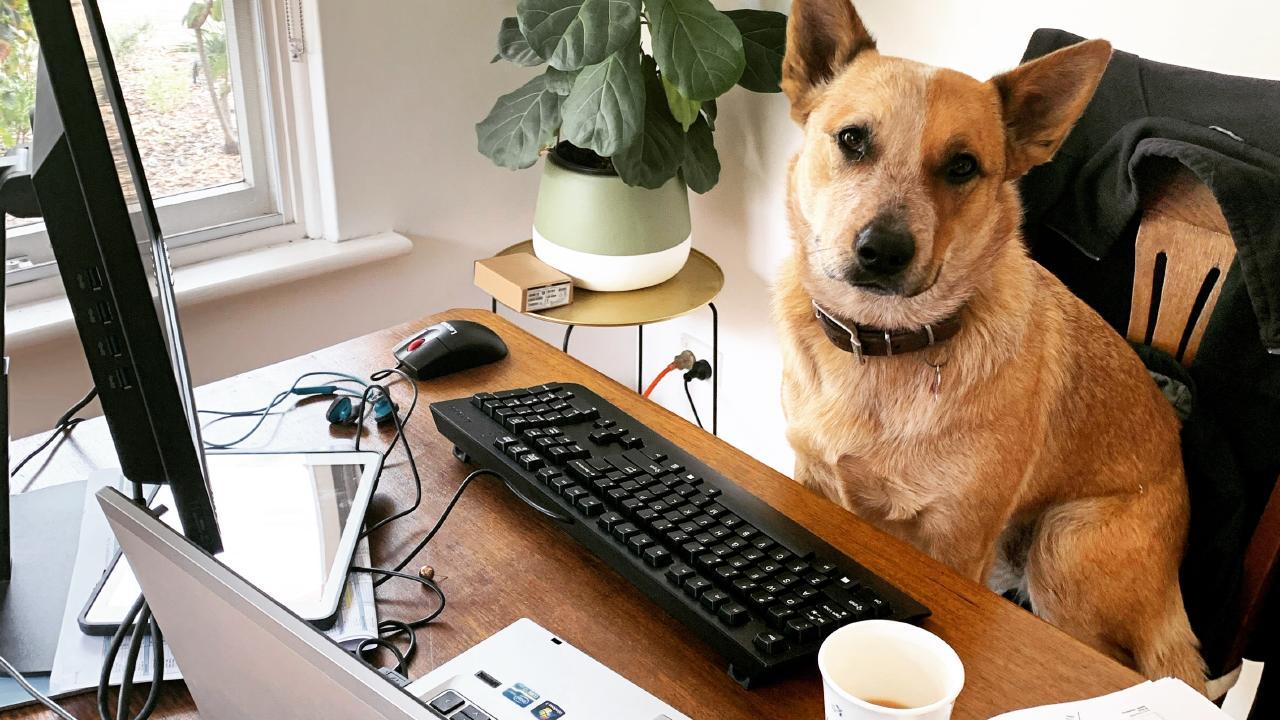 home office kutya