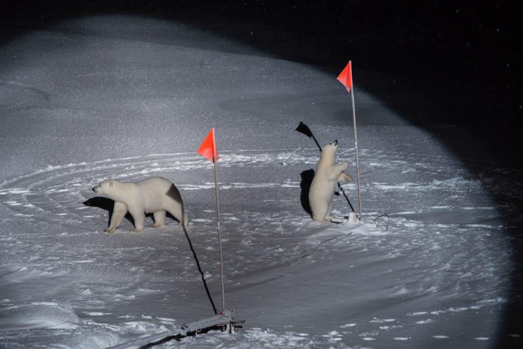 horvath eszter world press photo 2020 jegesmedvek