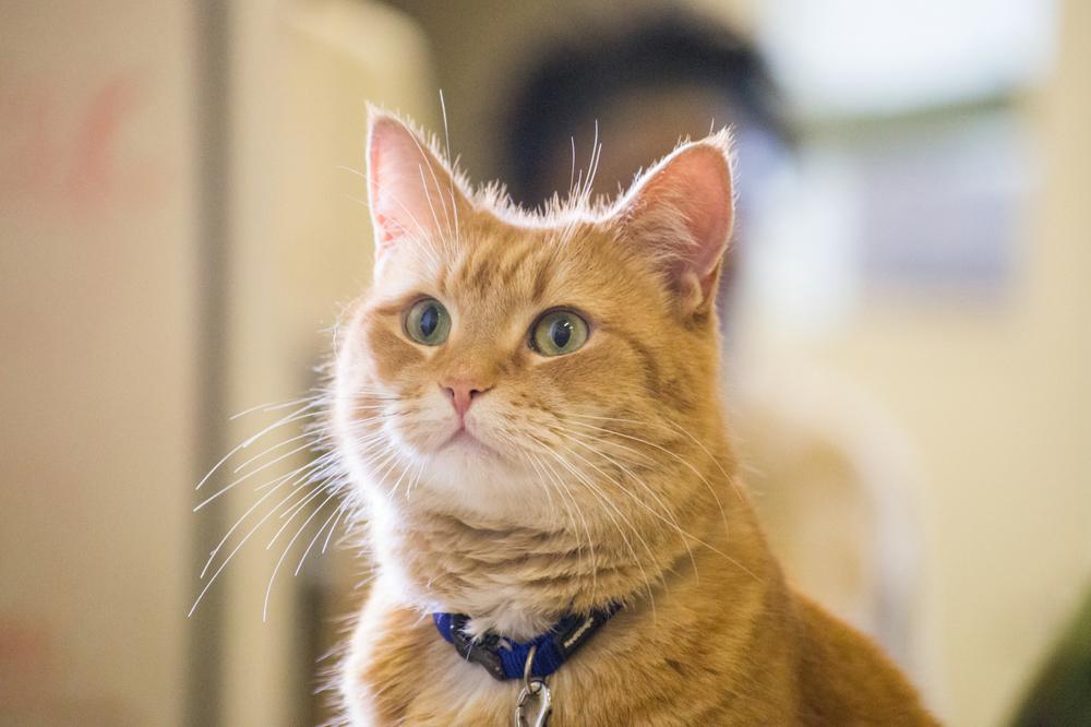 bob macska