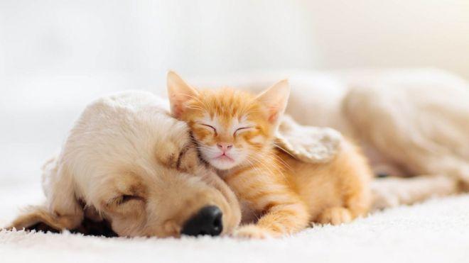 kutya macska allatok intelligenciaja
