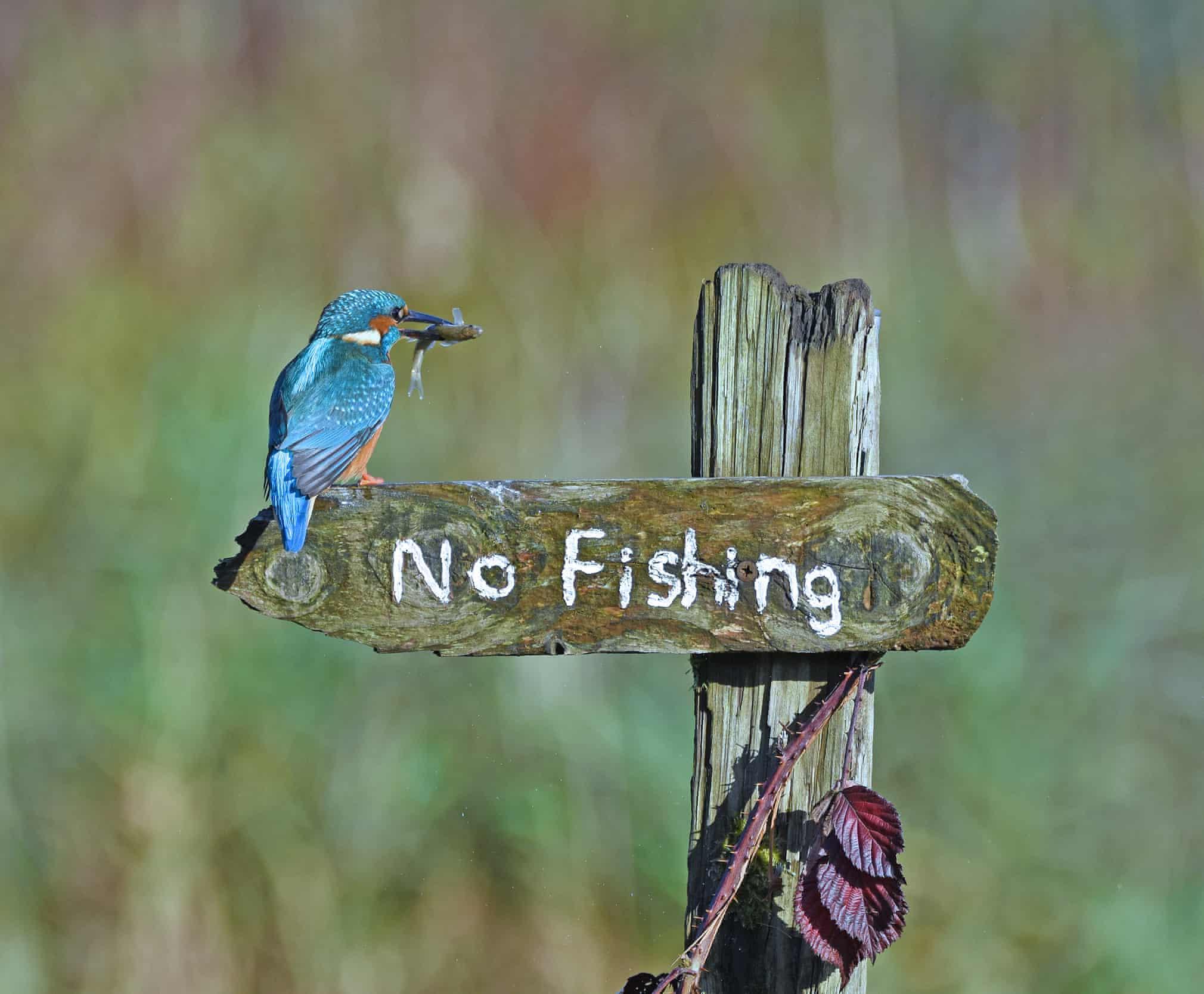 13 comedy wildlife jegmadar