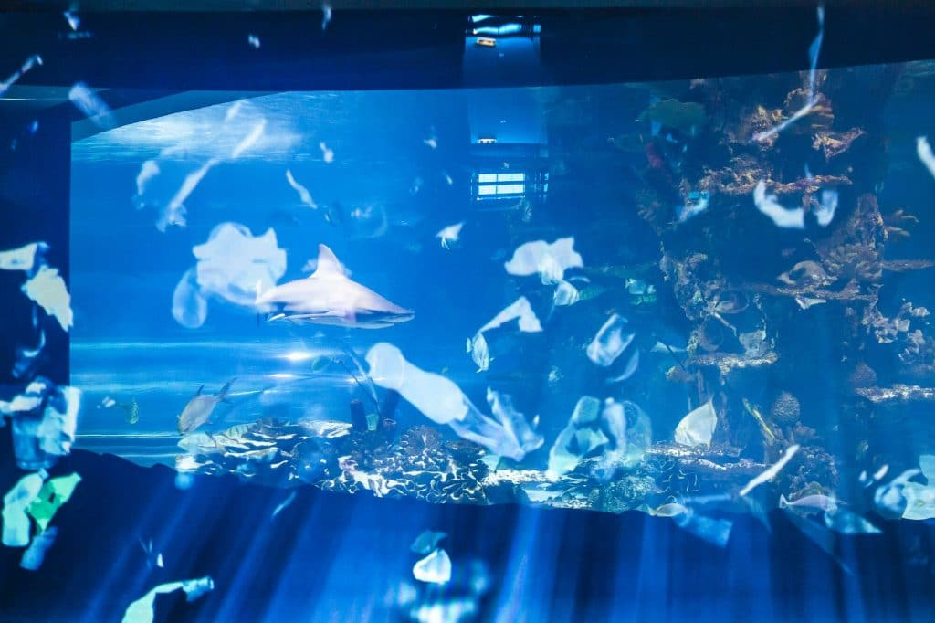 Campona Real Ocean Experience 3