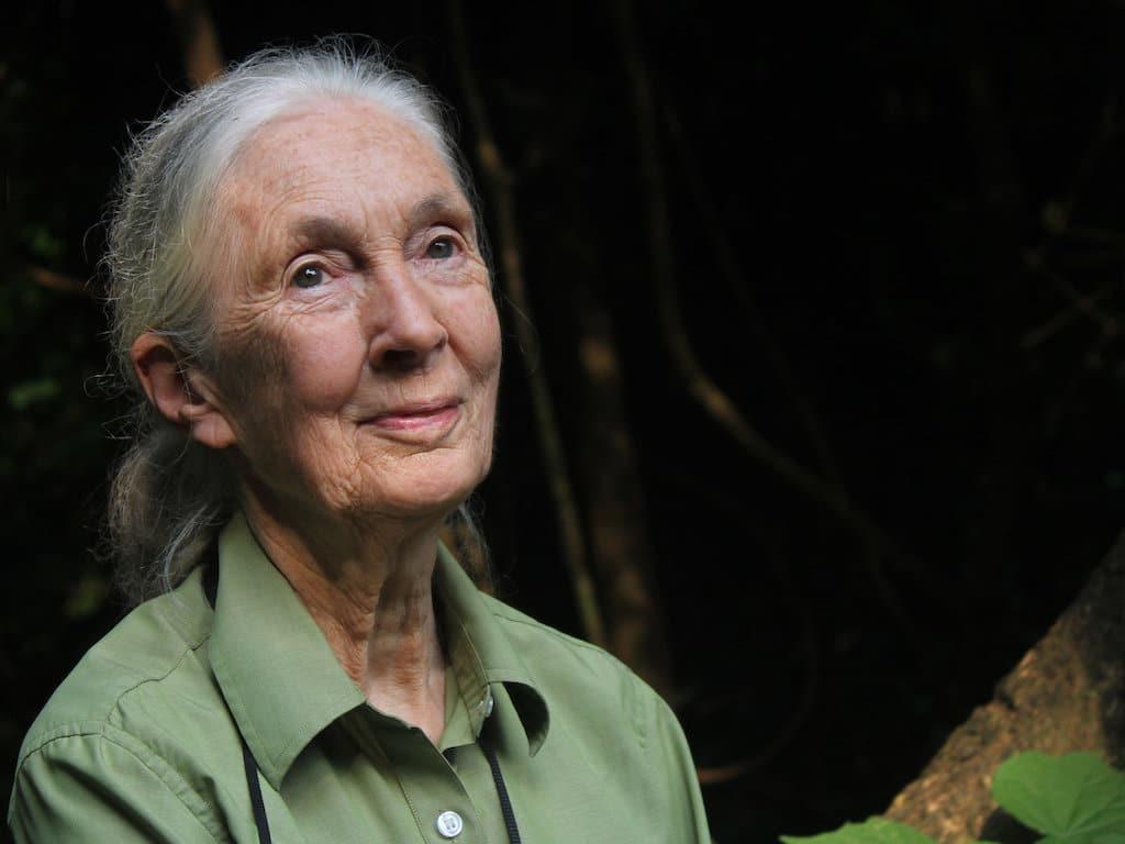 Jane Goodall koronavirus konyv