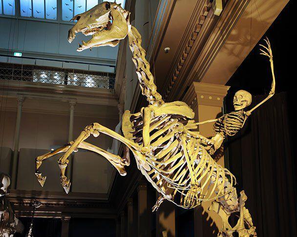 bone ranger amteasures