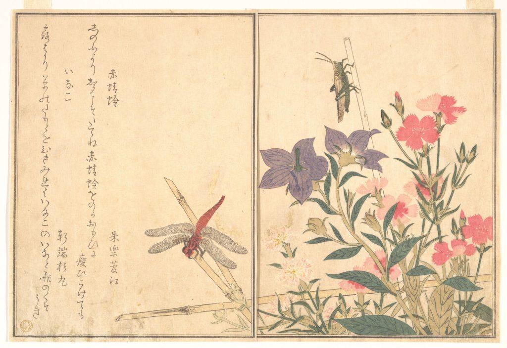 kitagawa utamaro red dragonfly mma kis rovarhatarozo