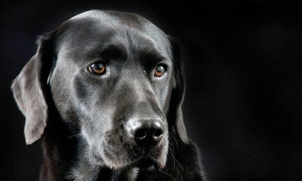 kutya agy arcfelismeres vizsgalat