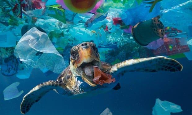 oceanok mikromuanyag tanulmany