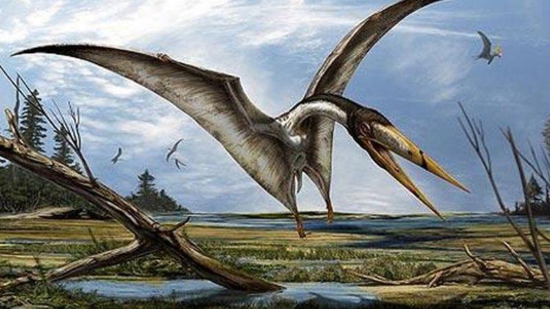 Pteroszaurusz Uj Dinoszaurusz Faj