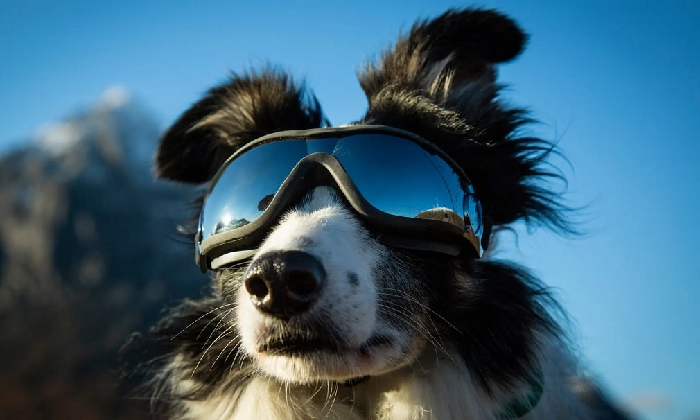 border collie mentokutya kutya skocia hegyek siszemuveg nap fotoja