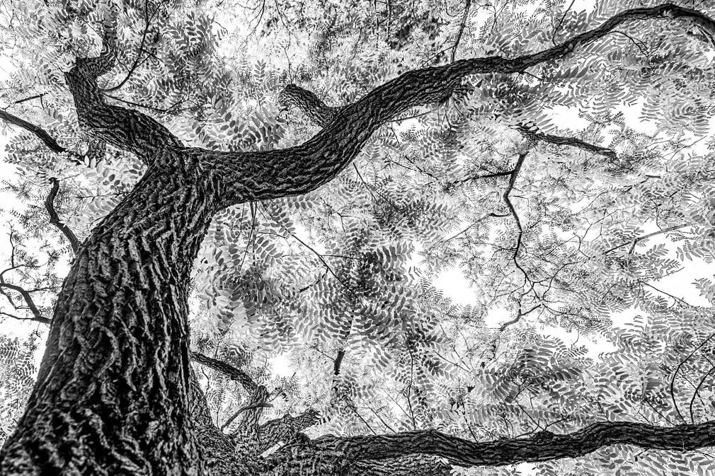 fekete feher fa termeszetfoto franka slothouber nap fotoja