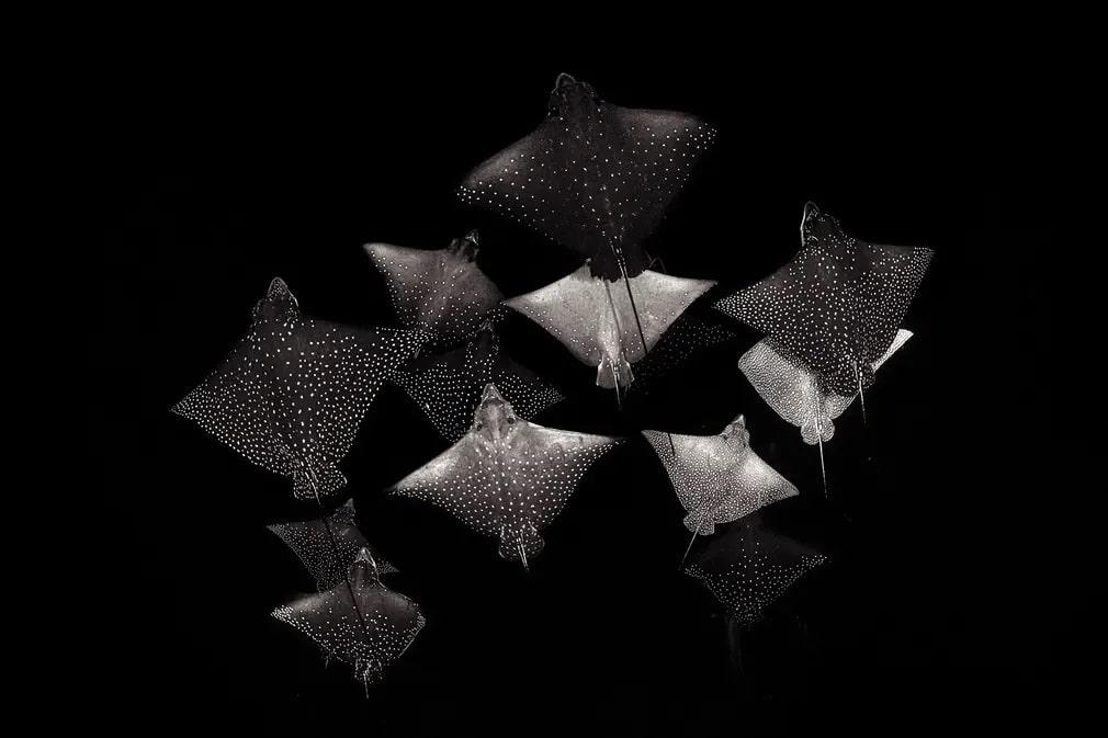 Fekete Feher Raja Termeszetfoto Henley Spiers Nap Fotoja