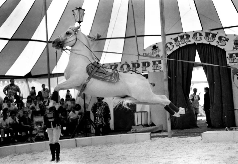 Lo Lovas Bemutato Arab Teliver Cirkusz Mutatvany Nap Fotoja