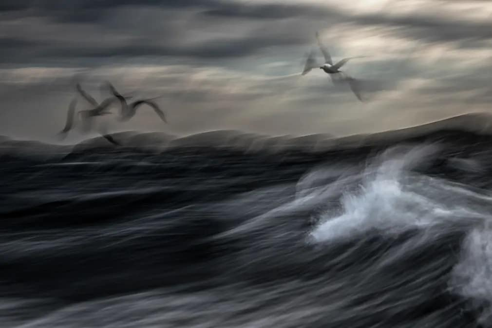 Madarak Jiri Hrebicek Siraly Norvegia Termeszetfoto Nap Fotoja