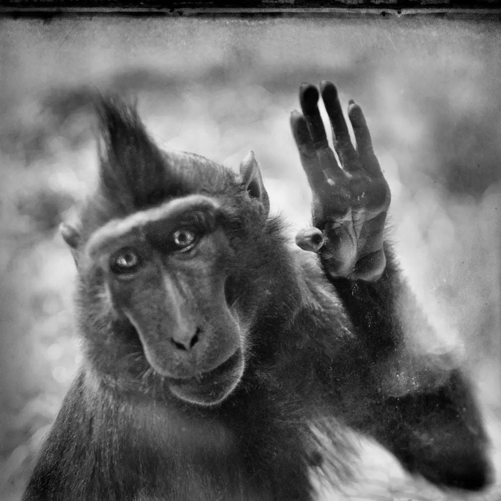 emlos makako antwerpen allatkert nap fotoja