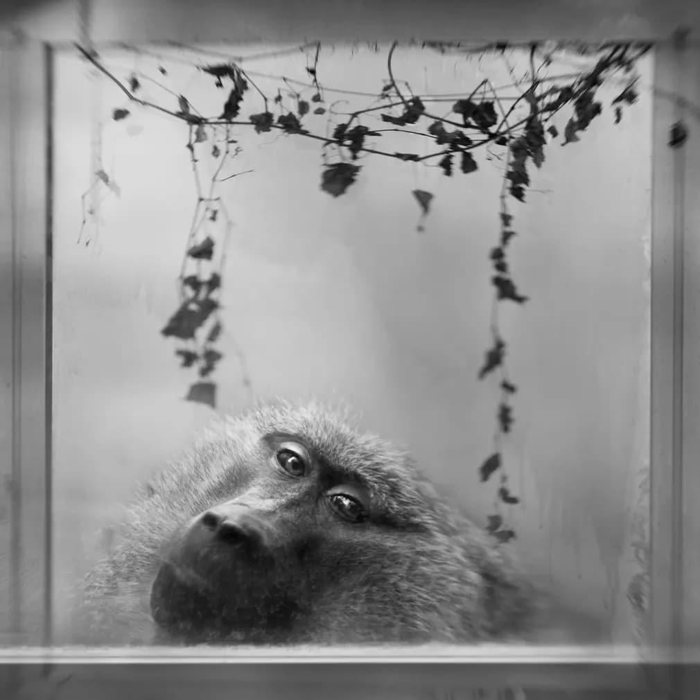 emlos pavian moszkva allatkert nap fotoja