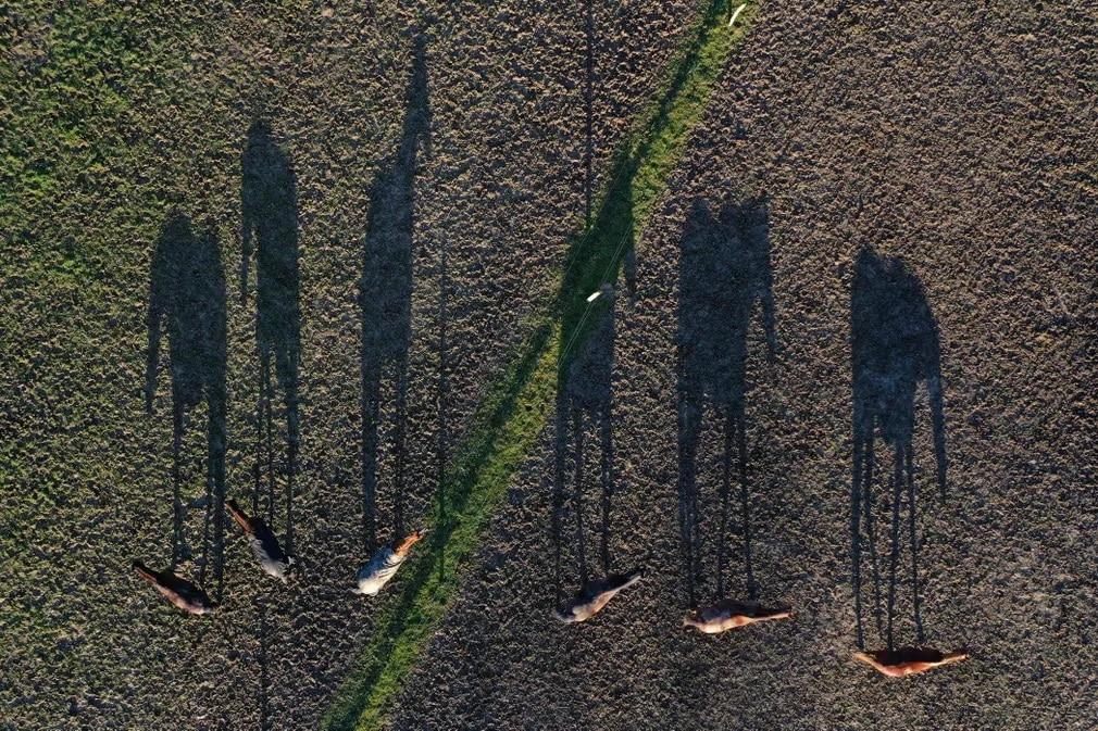 franciaorszag arnyek lovak termeszet mezo nap fotoja