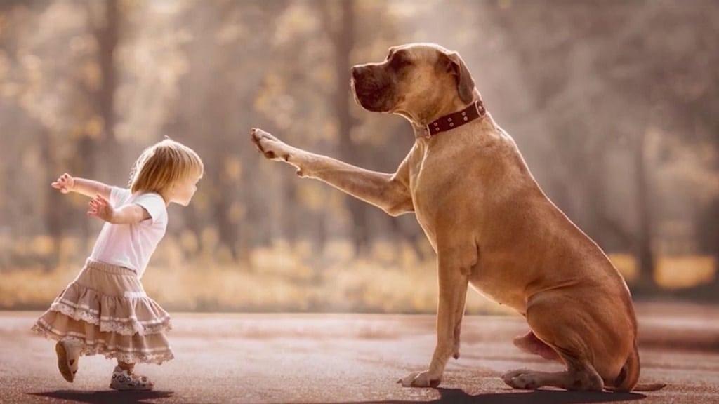 gyerek kutya