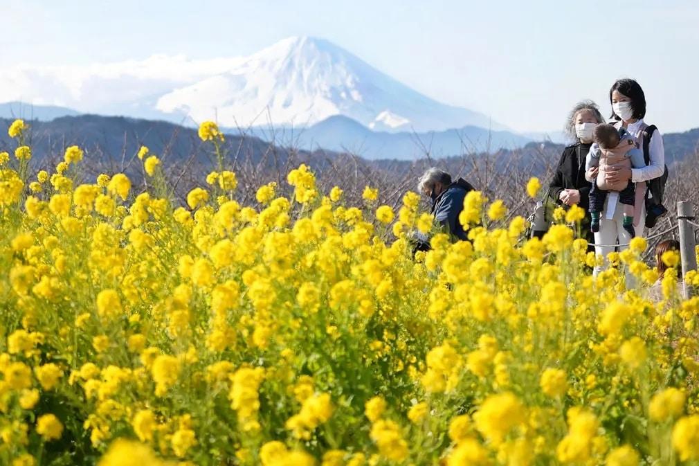 japan csalad gyerek park mezo viragok nap fotoja