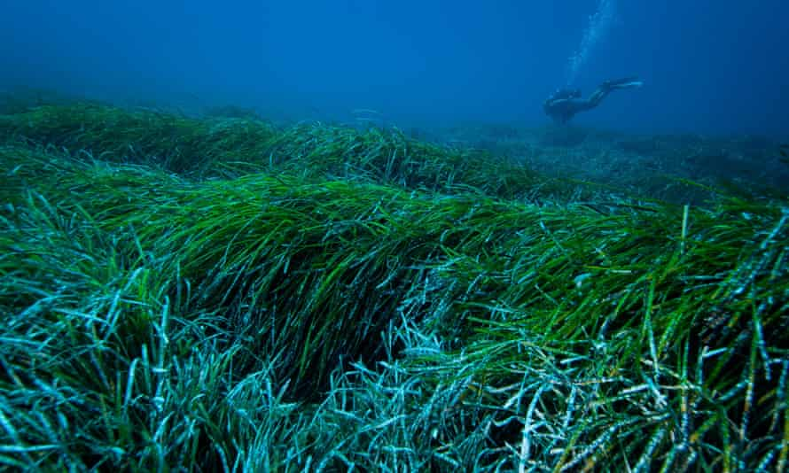 tengeri fu mikromuanyag