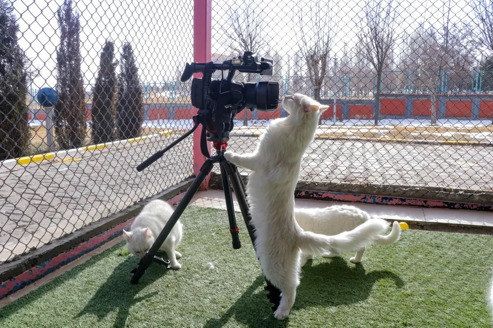 torokorszag macska van fajtiszta kamera nap fotoja