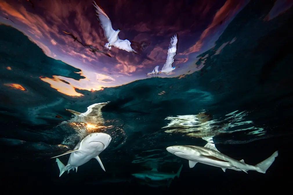 UPY fotopalyazat fotoverseny viz alatti nyertes forografia renee capozzola nap fotoja