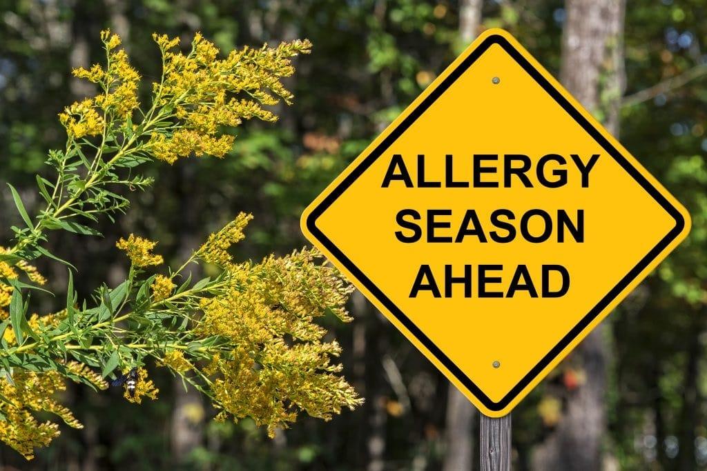 allergiaszezon allergia klimavaltozas pollen
