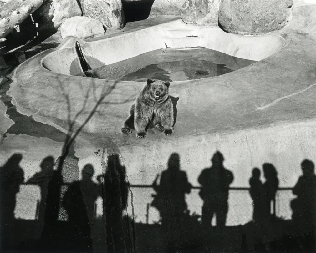 los angeles fekete feher gary krueger vintage kiallitas allatkert medve walt disney nap fotoja