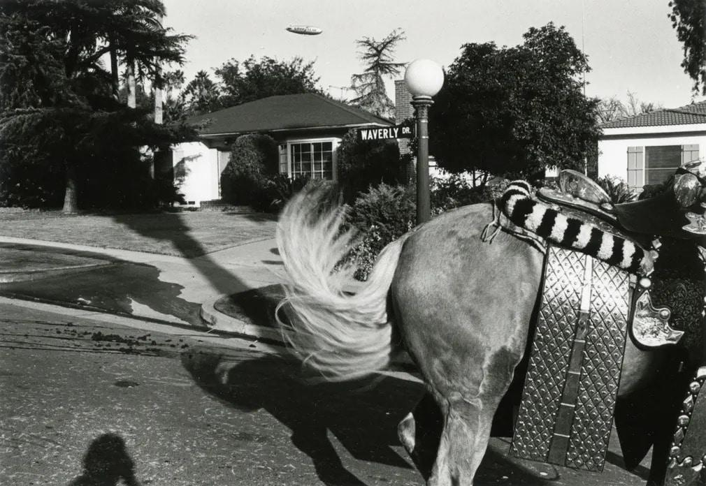 los angeles  fekete feher  gary krueger  vintage  kiallitas  lo  nap fotoja