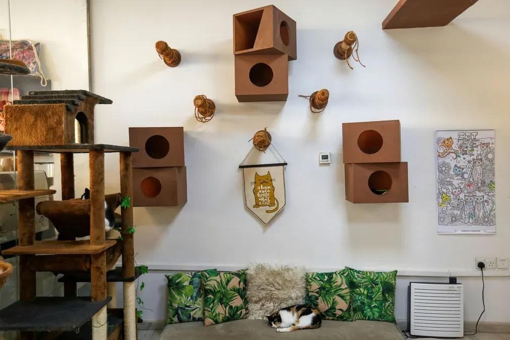 Dubaj, Ailuromania Cat Cafe, macsa, cica, kavezo, egyesult, arab emirsegek, orokbefogadas, alszik, nap fotoja