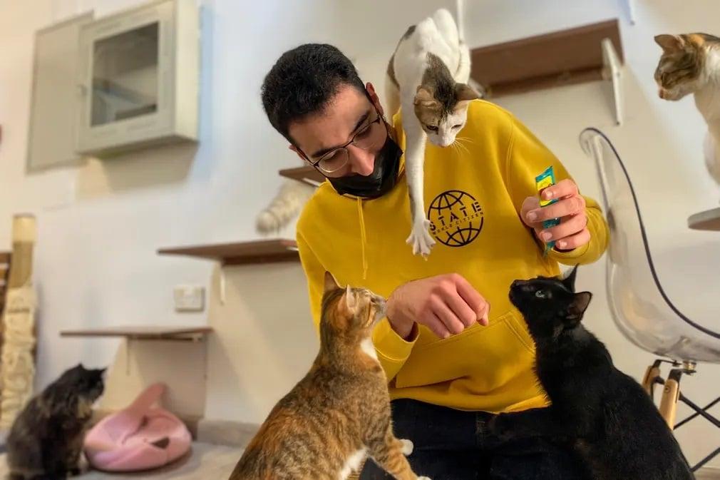 Dubaj, Ailuromania Cat Cafe, macsa, cica, kavezo, egyesult, arab emirsegek, orokbefogadas, jatek, nap fotoja