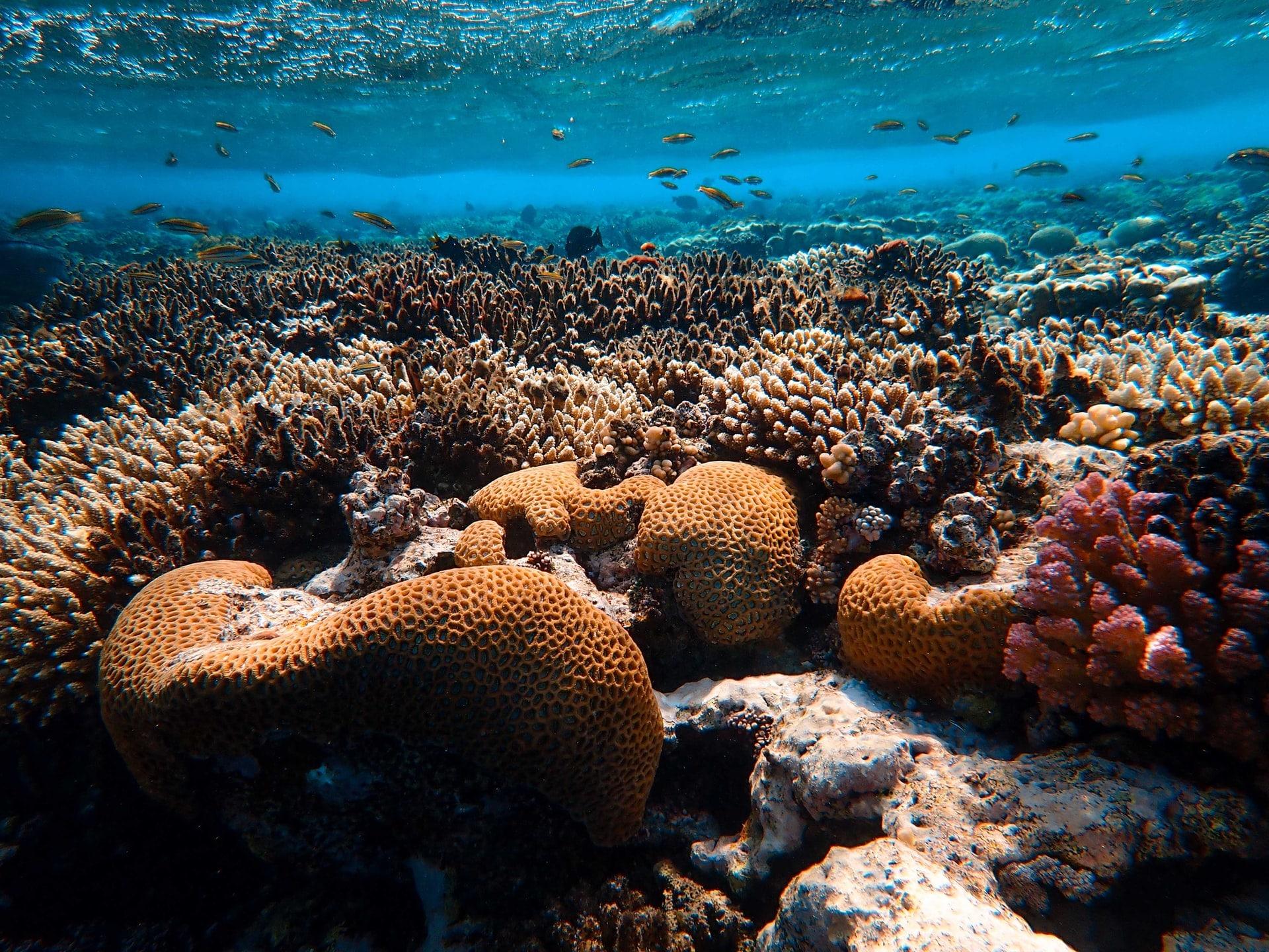 korallfeheredes korallzatony megfigyelo rendszer muhold