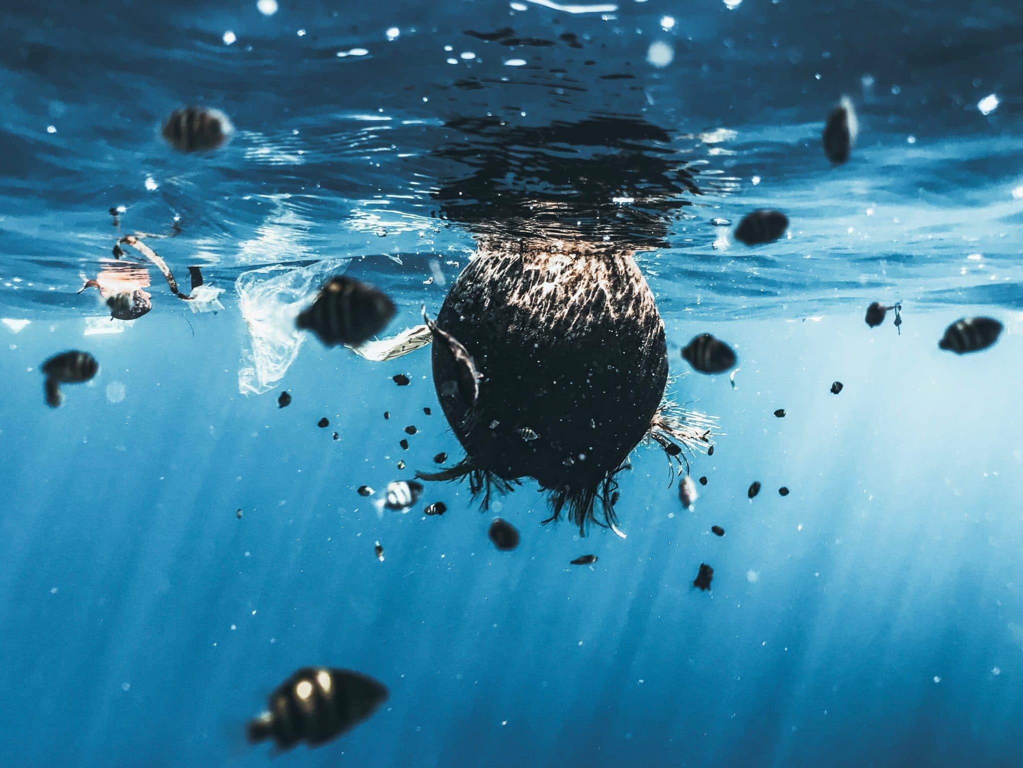 mikromuanyag muanyagszennyezes vizszennyezes kornyezetszennyezes