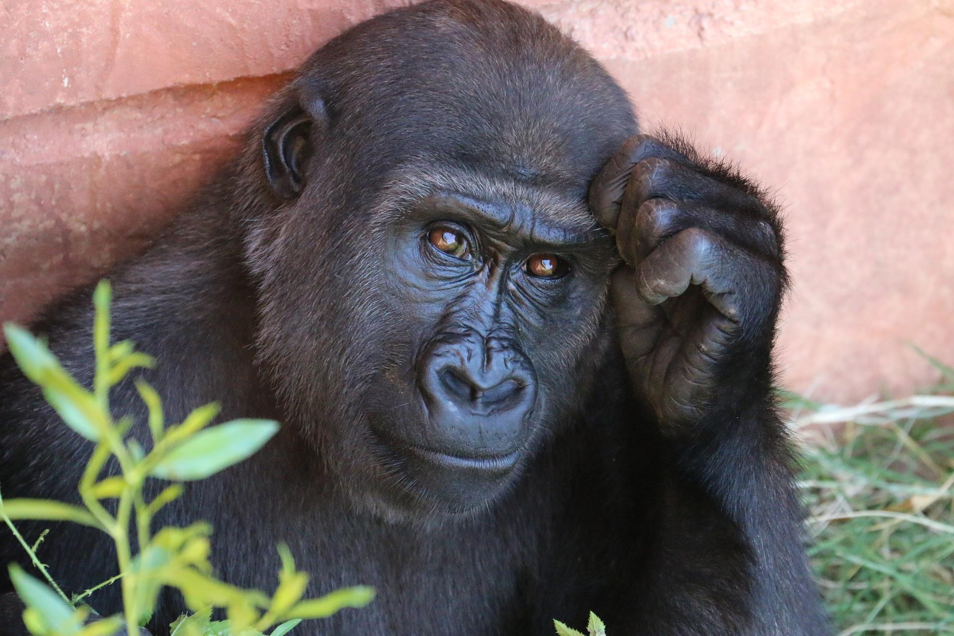 szokott majmok del-florida