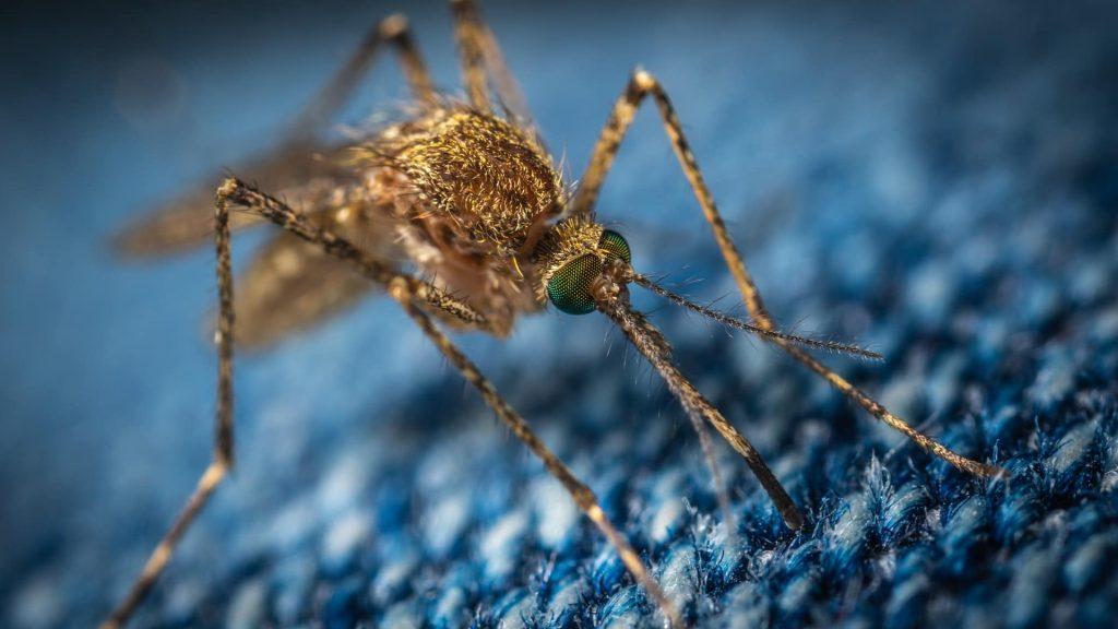 Dengue-Laz Szunyog Tudomany