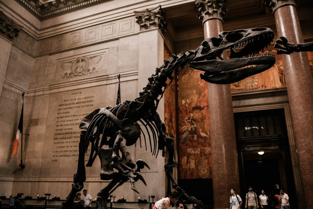 Dinoszauruszok Labnyom David Martill Folkstone